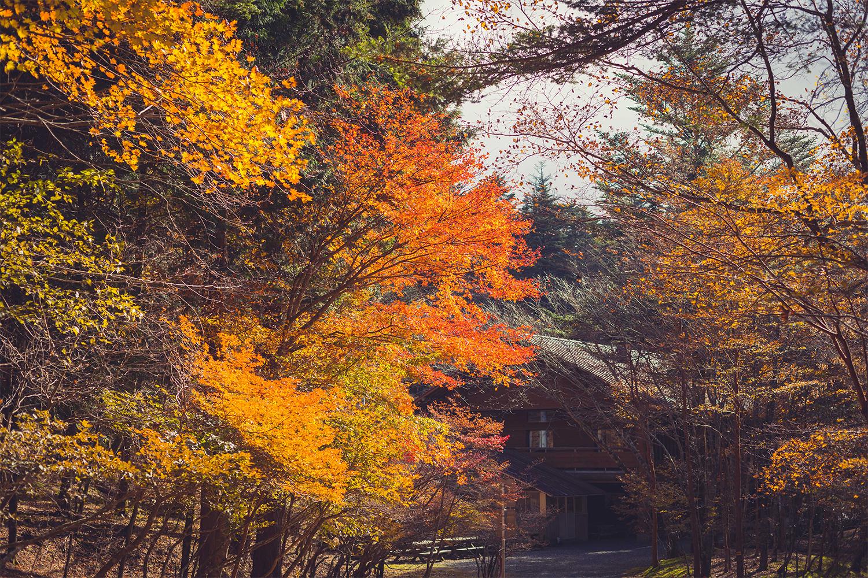 原生林の紅葉と雪化粧の南アルプス国立公園を望む<