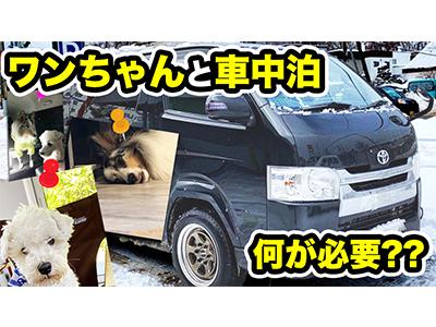 【愛犬とハイエースで車中泊】北海道で2匹のワンコと旅をする専門店スタッフに色々聞いてみたら、カスタムの悩みが解消....!?